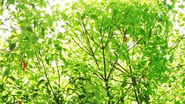 新緑の頃の木々