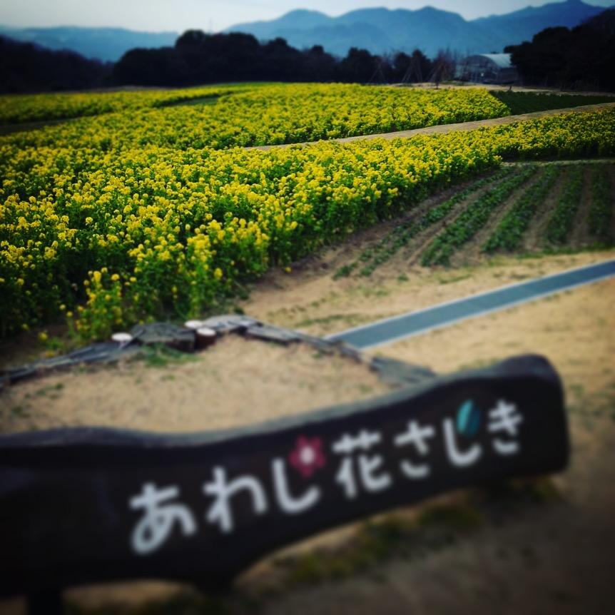 淡路花さじきの看板と菜の花