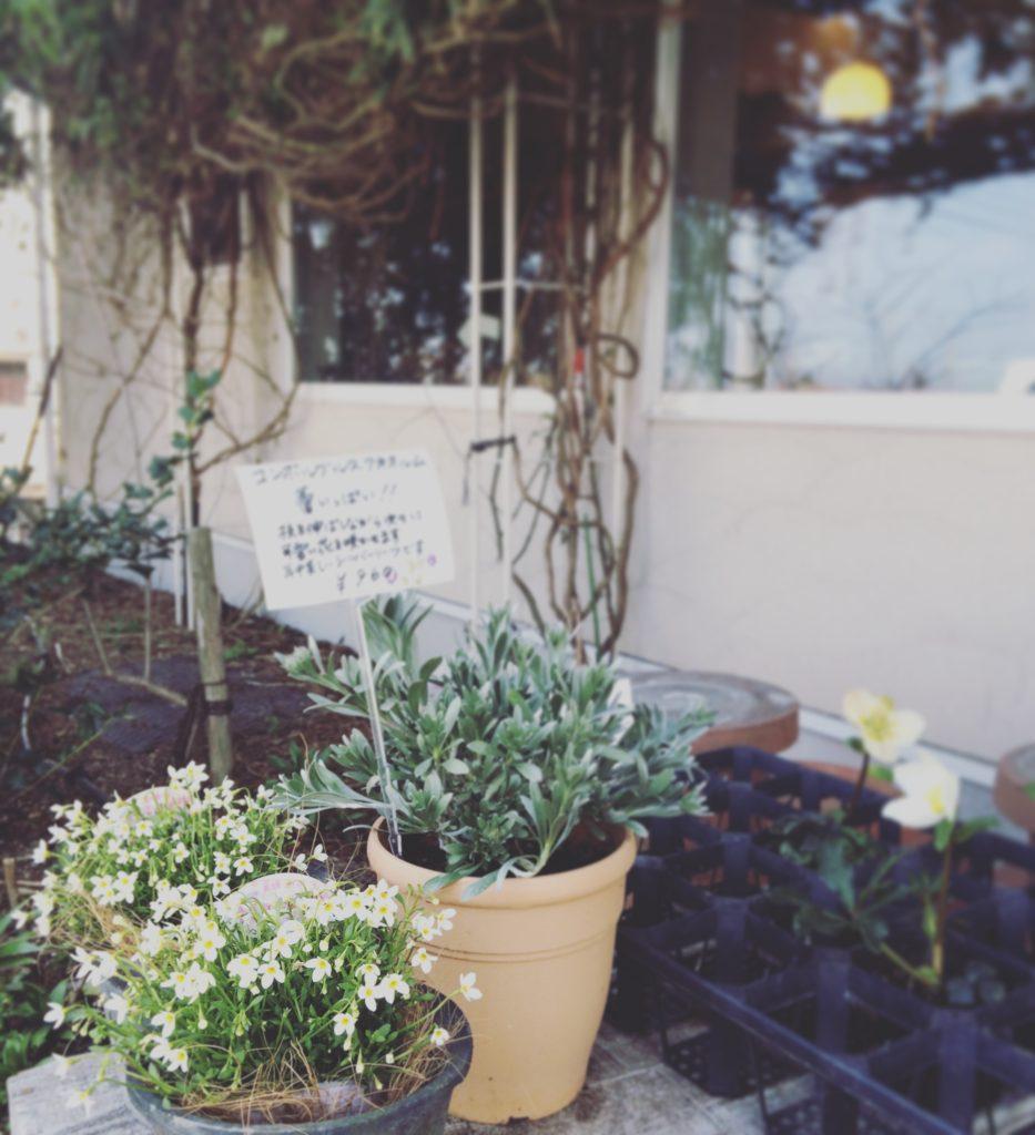 ルフィアージュの観葉植物