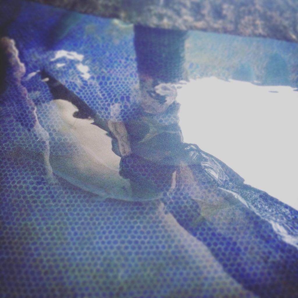びんび家の生け簀で泳ぐハマチ