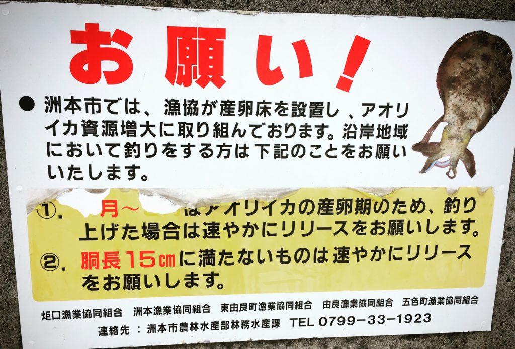 淡路島のアオリイカ捕獲規制(洲本市)