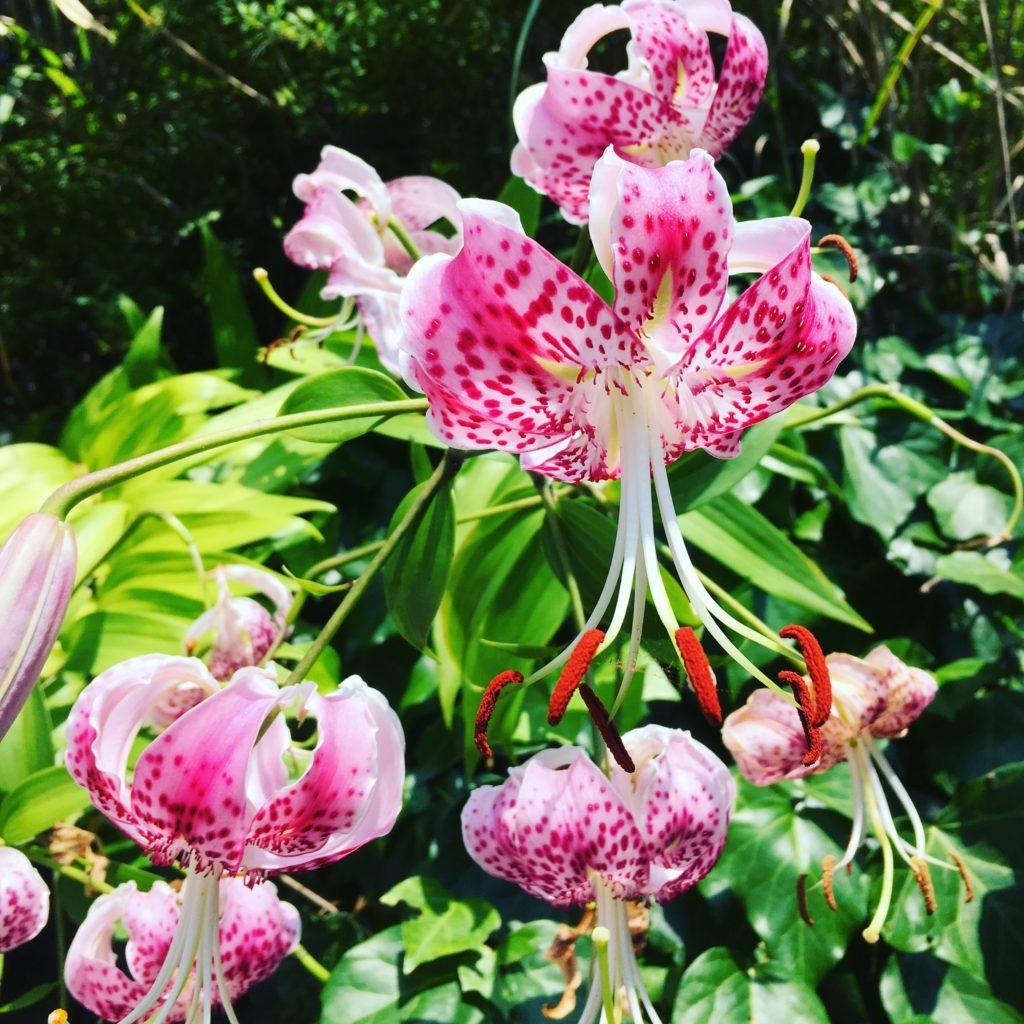 ラウーベに咲いている花