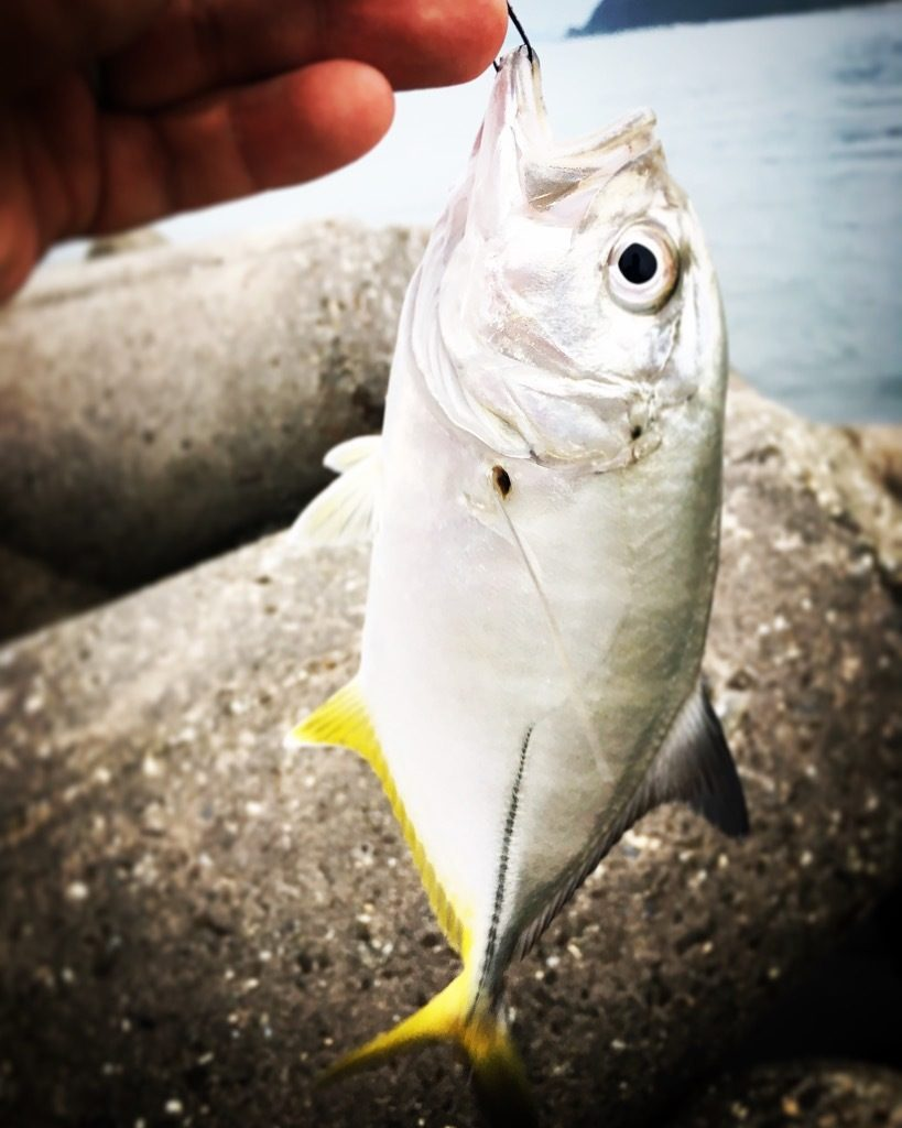 JAZZの爆釣ジグメバルチューンでメッキ