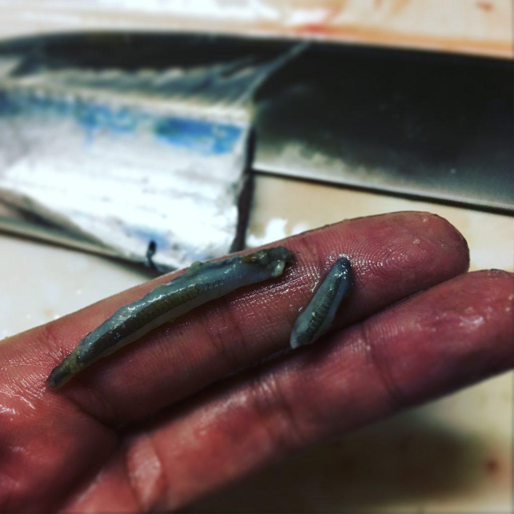 タチウオのベイト(イワシ?)9cm201611