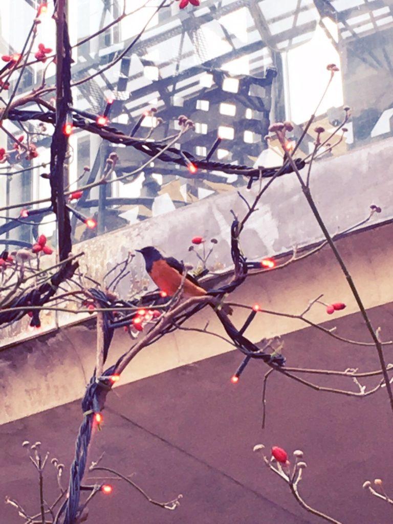 淡路夢舞台温室奇跡の星の植物館に迷い込んだ鳥