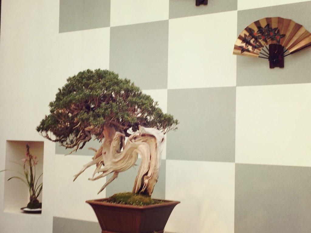 淡路夢舞台温室奇跡の星の植物館の盆栽