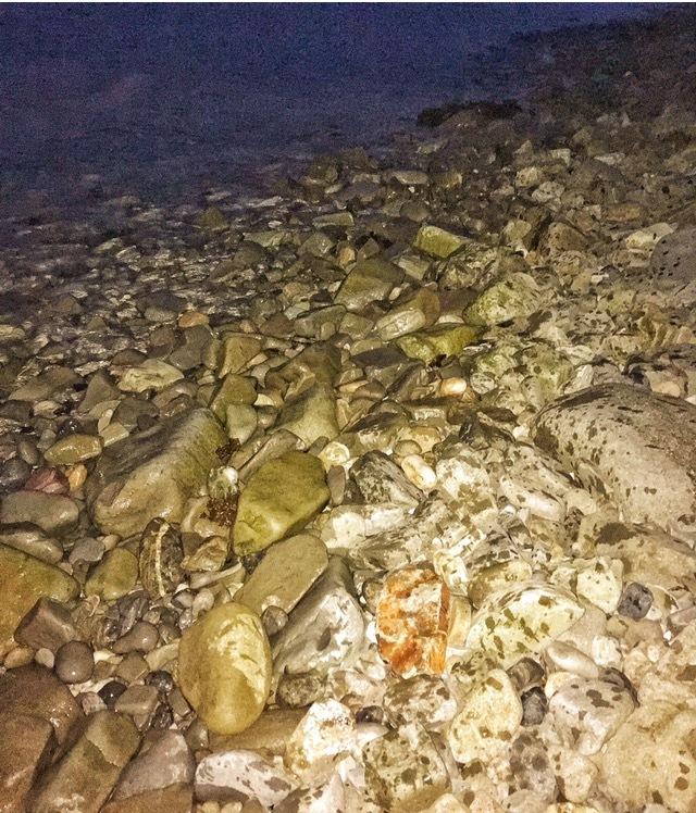 メバル27.5cmを釣ったゴロタ浜