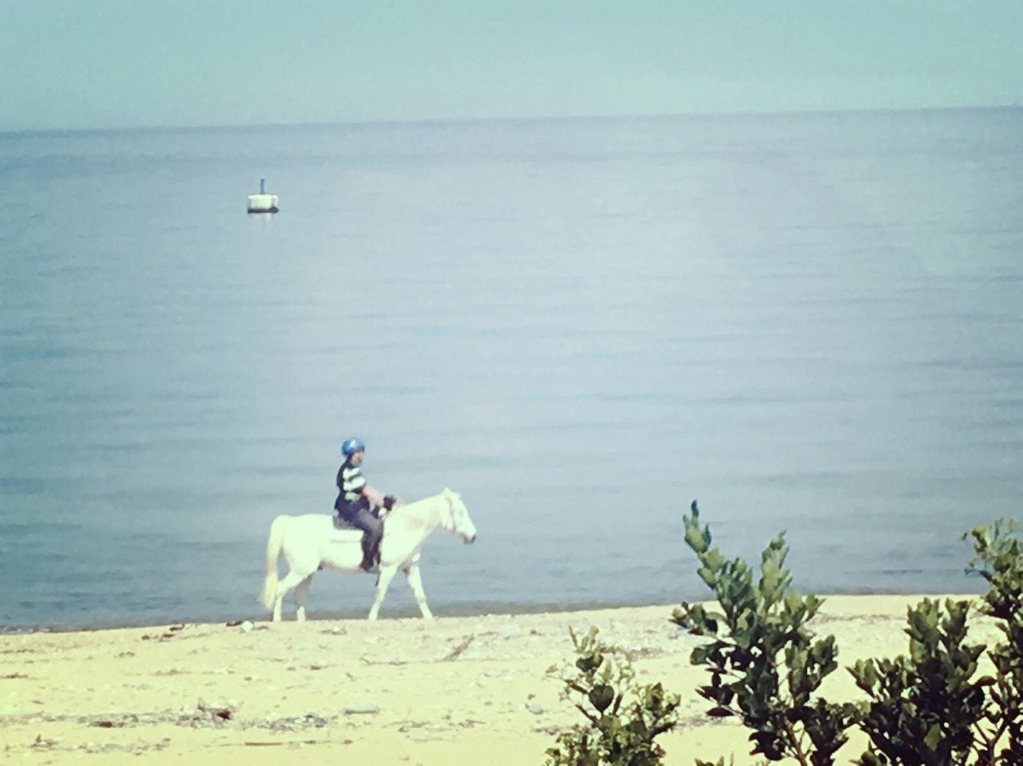 淡路島クルマカフェ28の窓から見えた乗馬風景