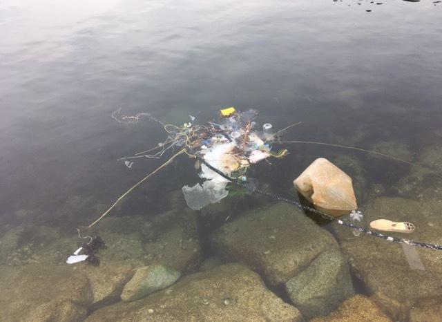 餃子・トッポギサイズのアオリイカが隠れている浮遊物