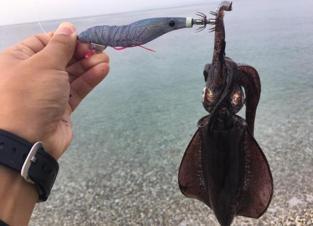 サーフエギングで釣れたアオリイカ12cmとエギーノぴょんぴょんサーチ(2017.9)