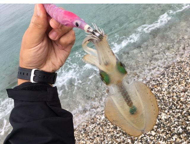 サーフエギングで釣ったアオリイカ14cm(2017.9)とエギーノぴょんぴょん