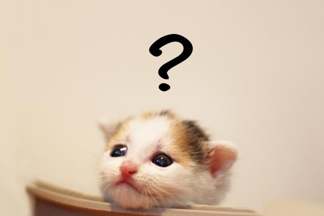 悩む、考える、疑問の子猫?