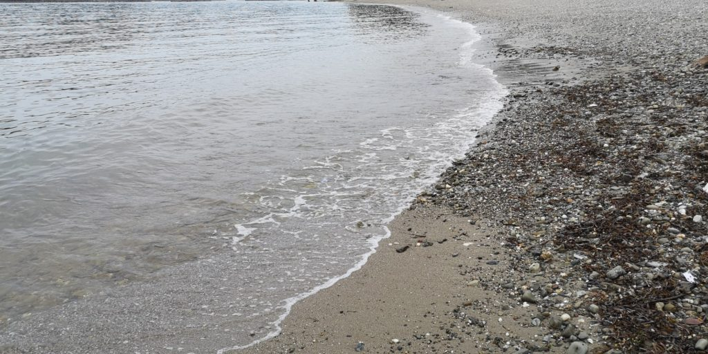 海藻の打ち上げられた波打ち際