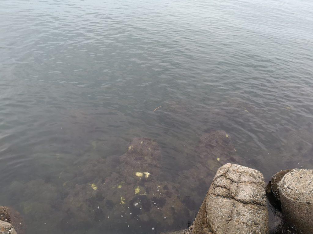 テトラと穏やかな海面澄み潮