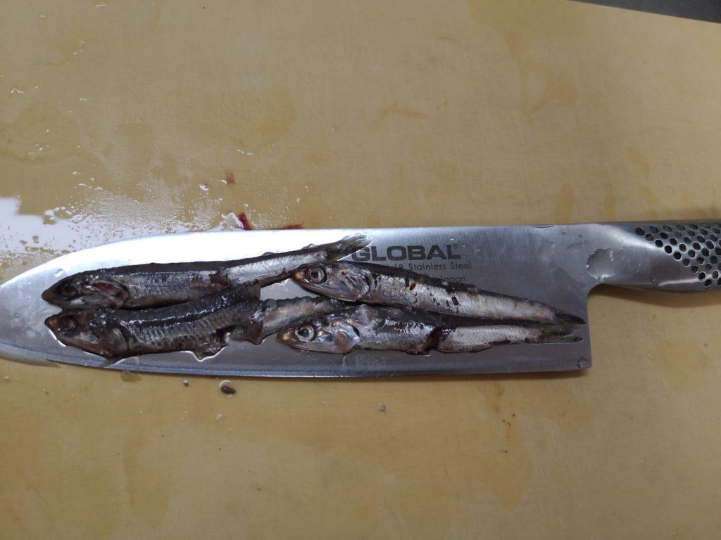 低活性なタチウオの胃から出てきたカタクチイワシ9cm
