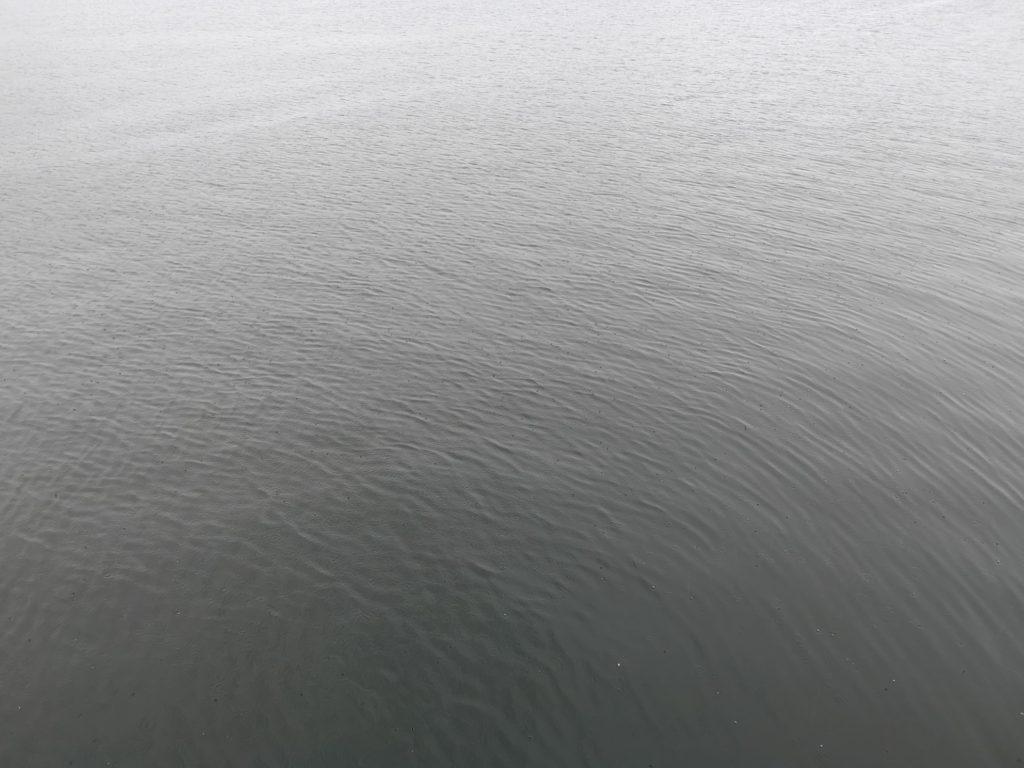 台風前に中サバ20cmクラスを数釣りした湾奥の台風二日前朝マヅメの海面(2018.9)