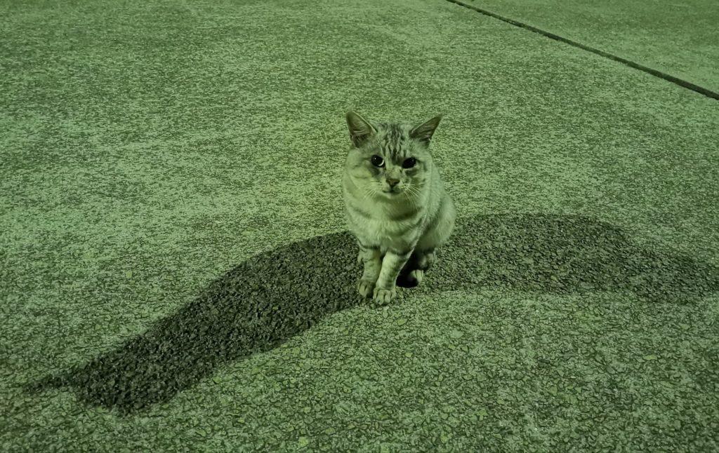 アジが釣れるのを待つ猫ネコ(2018.11)