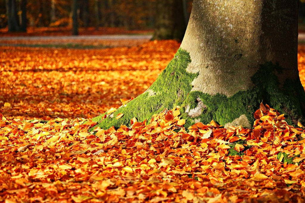 秋の訪れを感じる紅葉の落ち葉と木