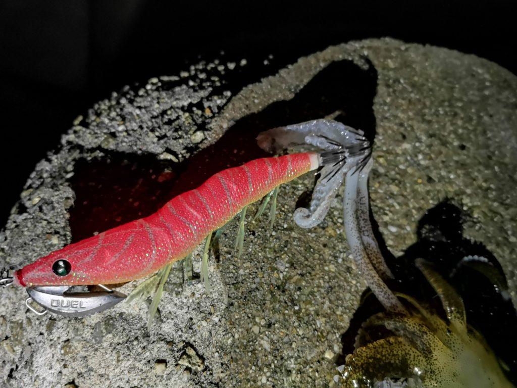 イージーキューキャストランガンマヅメマスターで釣ったアオリイカ207gの触腕(2018.11)