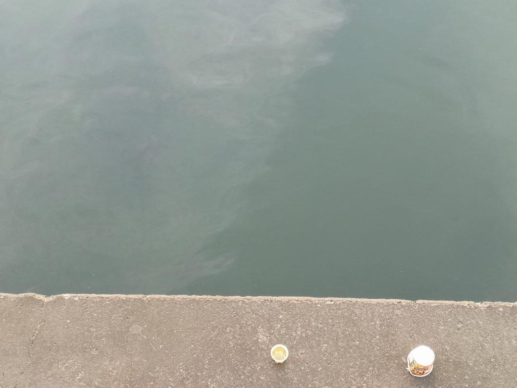 チヌがカタクチイワシを追っていた護岸側(2018.12)