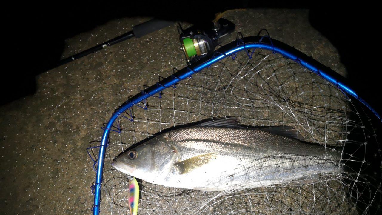 2019年初釣りのファーストキャストでサイレントアサシン99Fで釣ったシーバスとナスキーC3000とアーリープラス710XFとヘキサネット(2019.1)