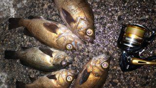 シャローマジックで釣ったメバル4枚とレイジーソリッドで釣ったメバル1枚(2019.6)
