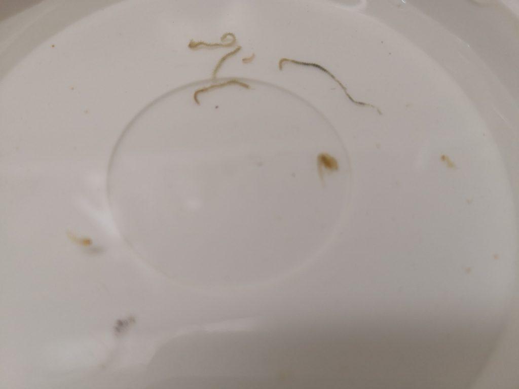 シャローマジックで釣ったメバル4枚とレイジーソリッドで釣ったメバル1枚の胃から出てきたバチ(2019.6)