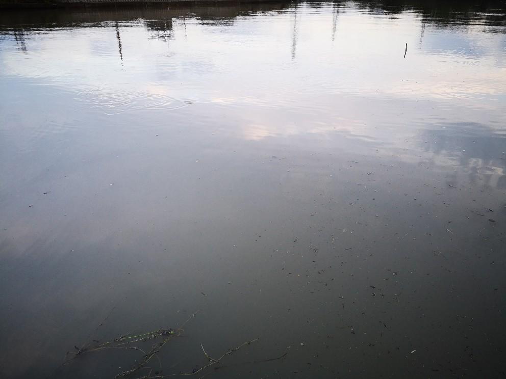 シーバス66cmを釣った日の朝、前日は雨降り(2019.6)