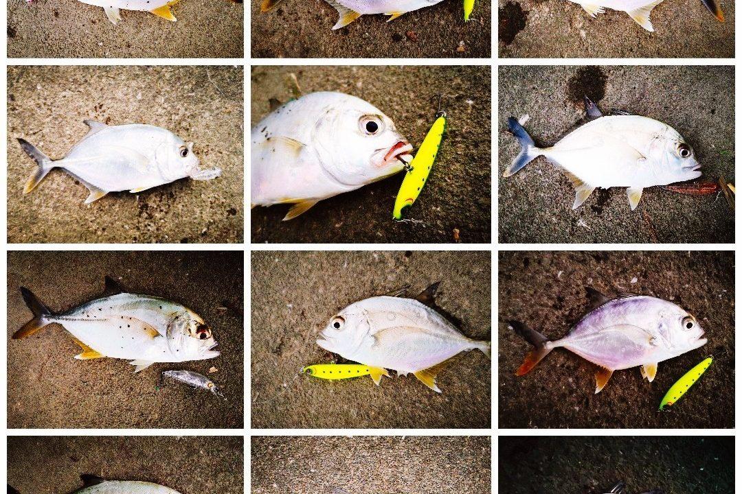 夕マヅメ1時間で12枚釣ったメッキ(2019.9)
