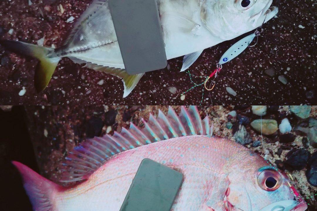 シーライドミニ で釣ったメッキとチャリコ(2019.10)