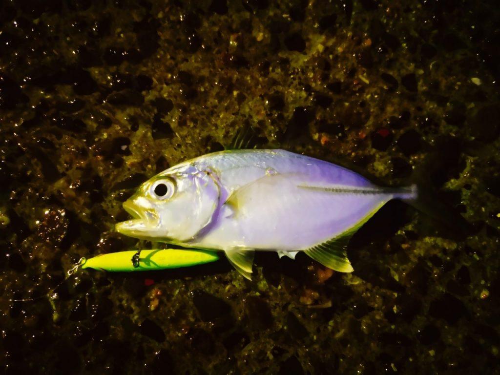 レイジーソリッドで釣ったメッキ(2019.10)
