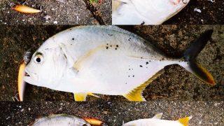 干潮周りの朝マヅメにメッキ5枚釣った日の集合写真(2019.10)