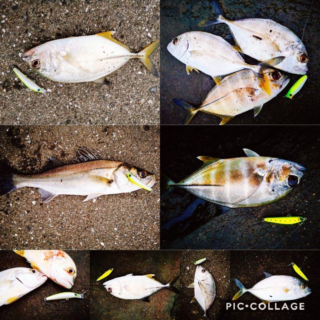 雨上がりの朝マヅメにメッキ10枚釣った時の集合写真シーバス含む(2019.10)