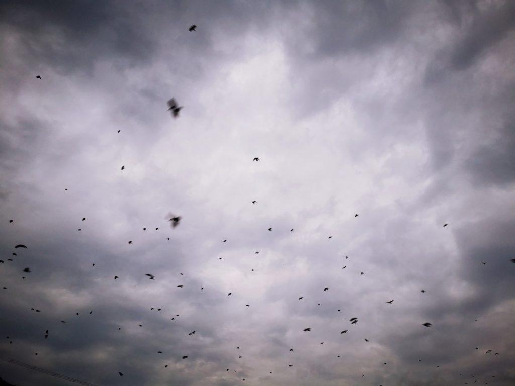 15分で12枚アジを釣った日のカラスの大群(2019.11)