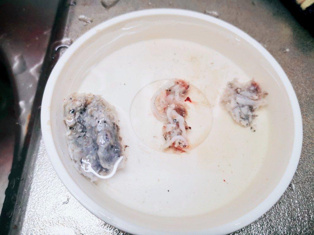15分で12枚アジの胃の中(2019.11)