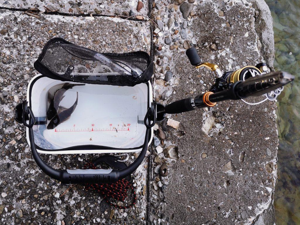 朝マヅメにゴロタでユーリで釣ったメバル12cm,14cmを入れたマグバイトのランガンライブウェル(2020.3)