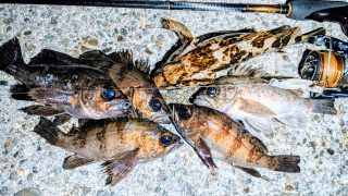 ビーナッツで釣った集合写真メバル7匹とタケノコメバル(2020.3)