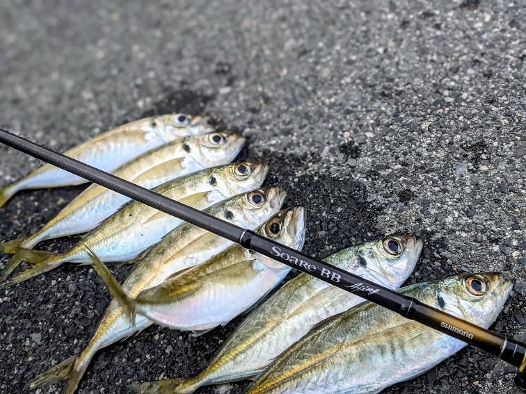 ソアレBBアジング610LSで釣った24cmアジ8匹(2020.12)