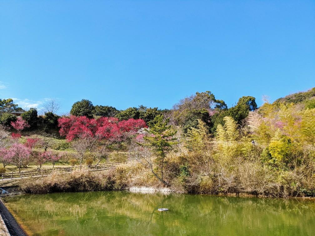 広田梅林ふれあい公園の池